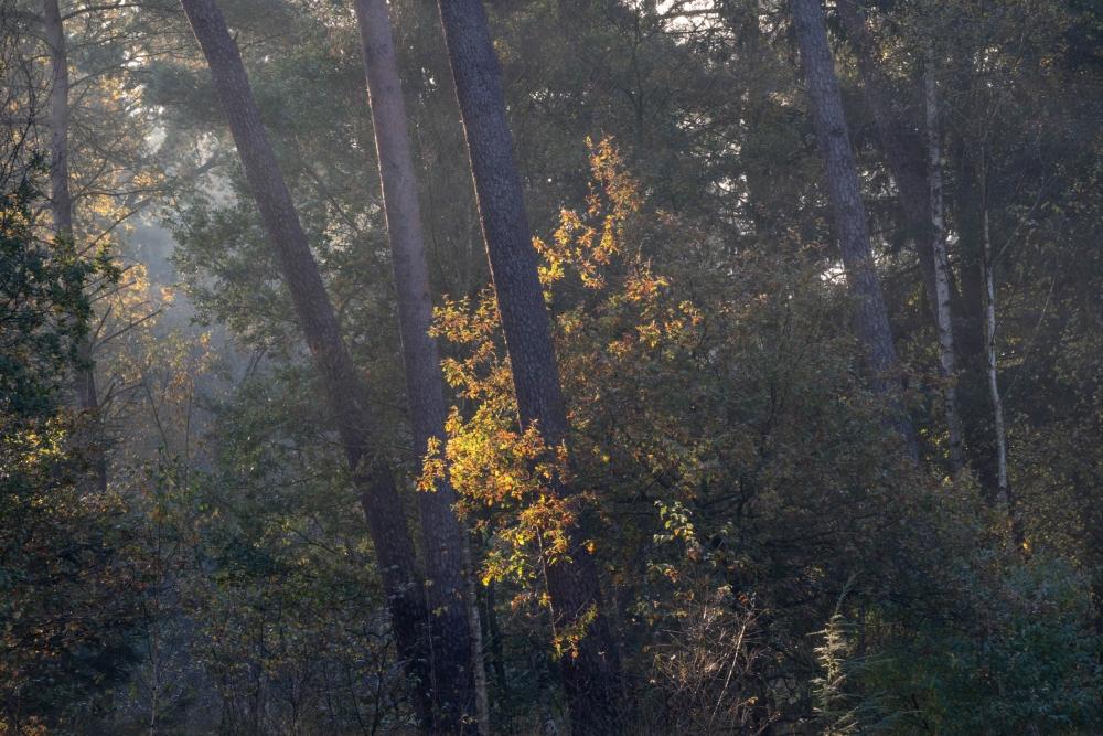 Herfstkleuren beginnen